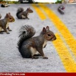 Squirrel safe driving