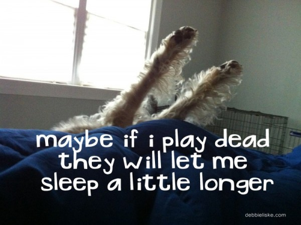 Maybe if I play dead they will let me sleep a little longer